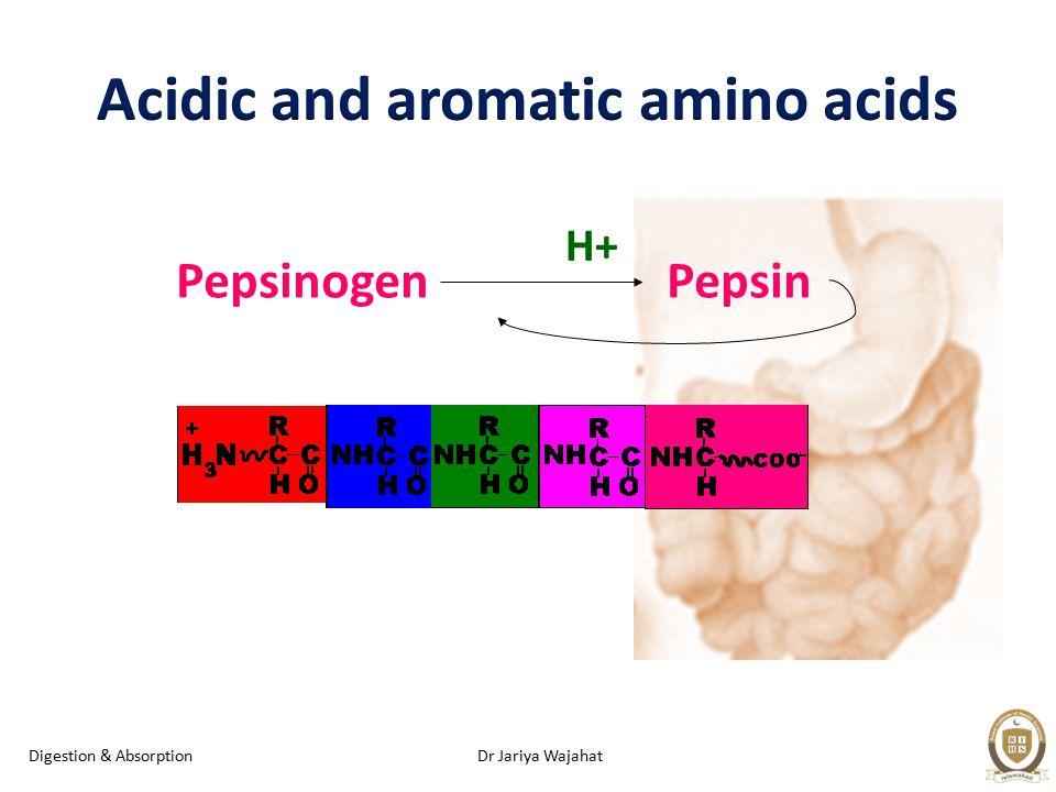 Dr Jariya WajahatDigestion & Absorption Pepsinogen Pepsin H+