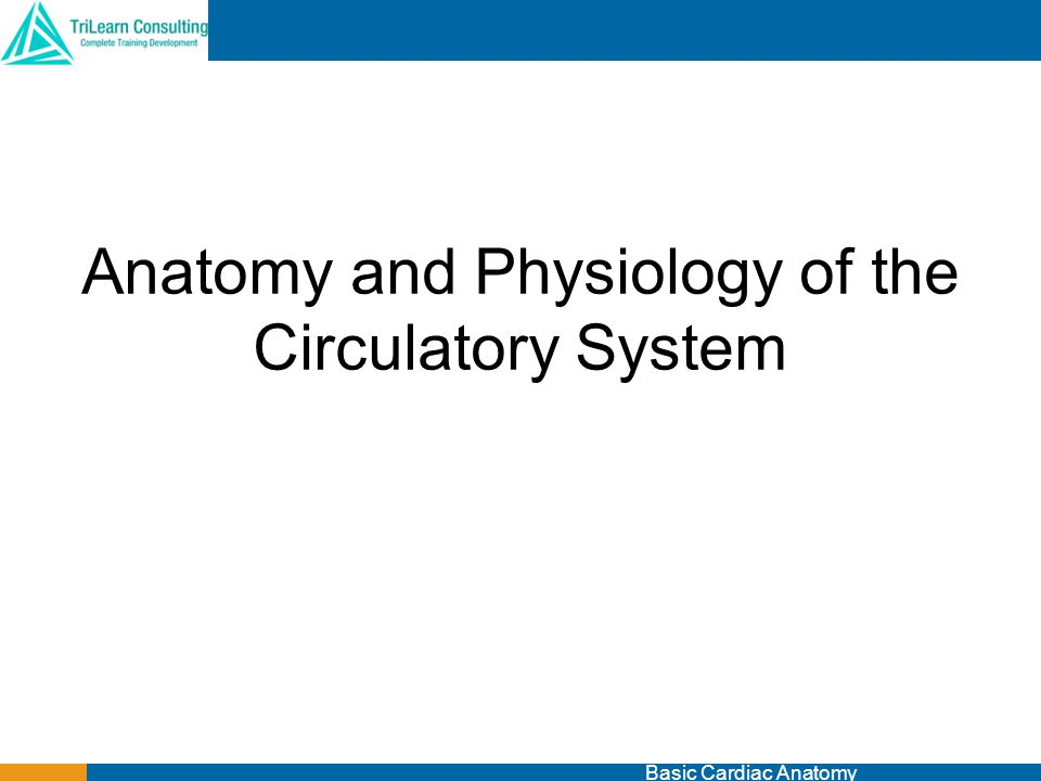 Anatomy and Physiology of the Circulatory System Basic Cardiac Anatomy