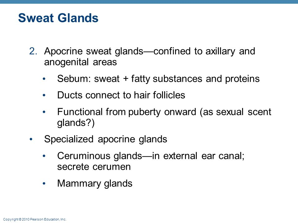 Copyright © 2010 Pearson Education, Inc. Sweat Glands 2.Apocrine sweat glands—confined to axillary and anogenital areas Sebum: sweat + fatty substance