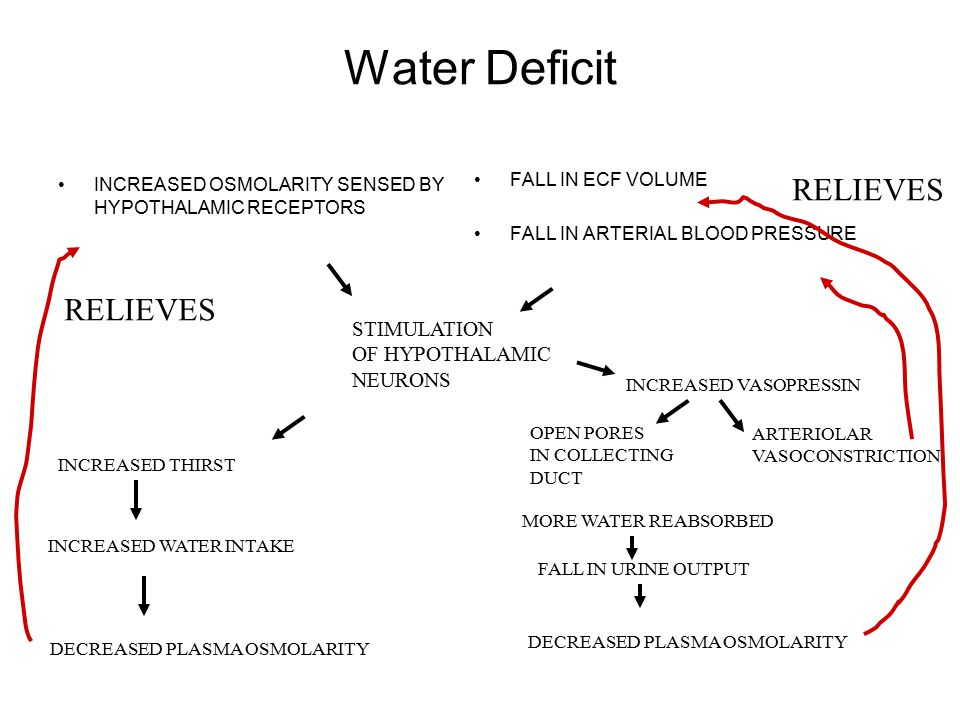 Water Deficit INCREASED OSMOLARITY SENSED BY HYPOTHALAMIC RECEPTORS FALL IN ECF VOLUME FALL IN ARTERIAL BLOOD PRESSURE STIMULATION OF HYPOTHALAMIC NEURONS INCREASED THIRST INCREASED WATER INTAKE DECREASED PLASMA OSMOLARITY INCREASED VASOPRESSIN OPEN PORES IN COLLECTING DUCT MORE WATER REABSORBED FALL IN URINE OUTPUT ARTERIOLAR VASOCONSTRICTION DECREASED PLASMA OSMOLARITY RELIEVES