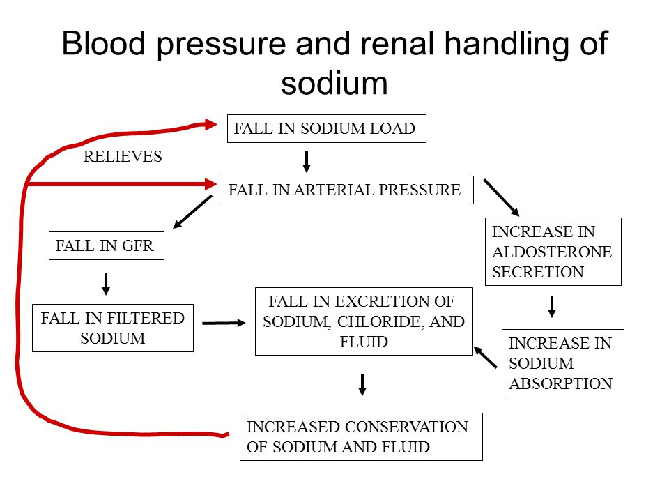 Blood pressure and renal handling of sodium FALL IN SODIUM LOAD FALL IN ARTERIAL PRESSURE FALL IN GFR FALL IN FILTERED SODIUM INCREASE IN ALDOSTERONE SECRETION INCREASE IN SODIUM ABSORPTION FALL IN EXCRETION OF SODIUM, CHLORIDE, AND FLUID INCREASED CONSERVATION OF SODIUM AND FLUID RELIEVES