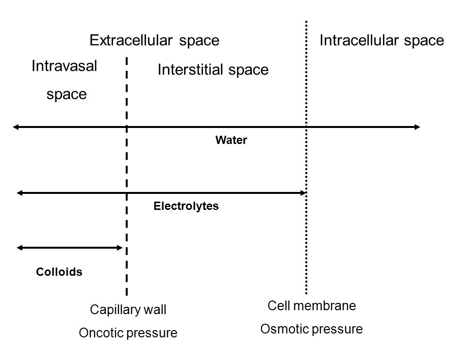 Intracellular spaceExtracellular space Interstitial space Intravasal space Capillary wall Oncotic pressure Colloids Electrolytes Water Cell membrane O