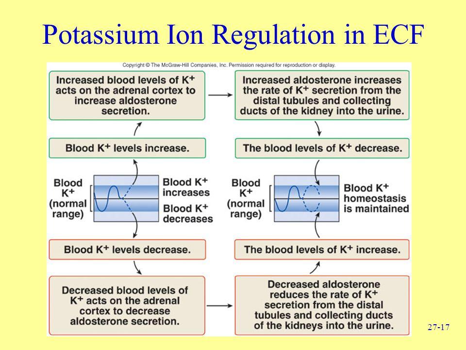 27-17 Potassium Ion Regulation in ECF