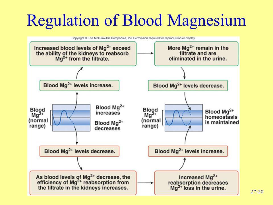 27-20 Regulation of Blood Magnesium
