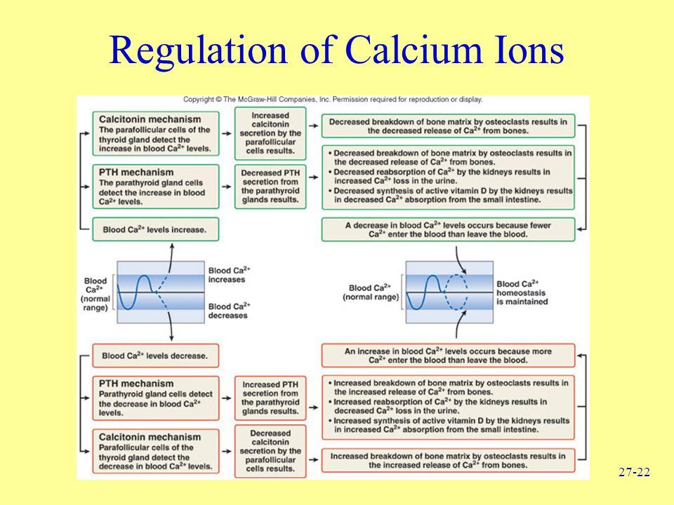 27-22 Regulation of Calcium Ions