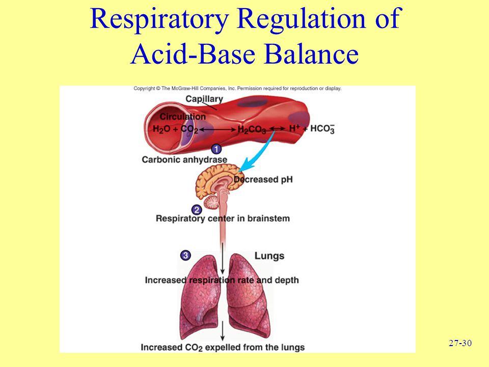 27-30 Respiratory Regulation of Acid-Base Balance