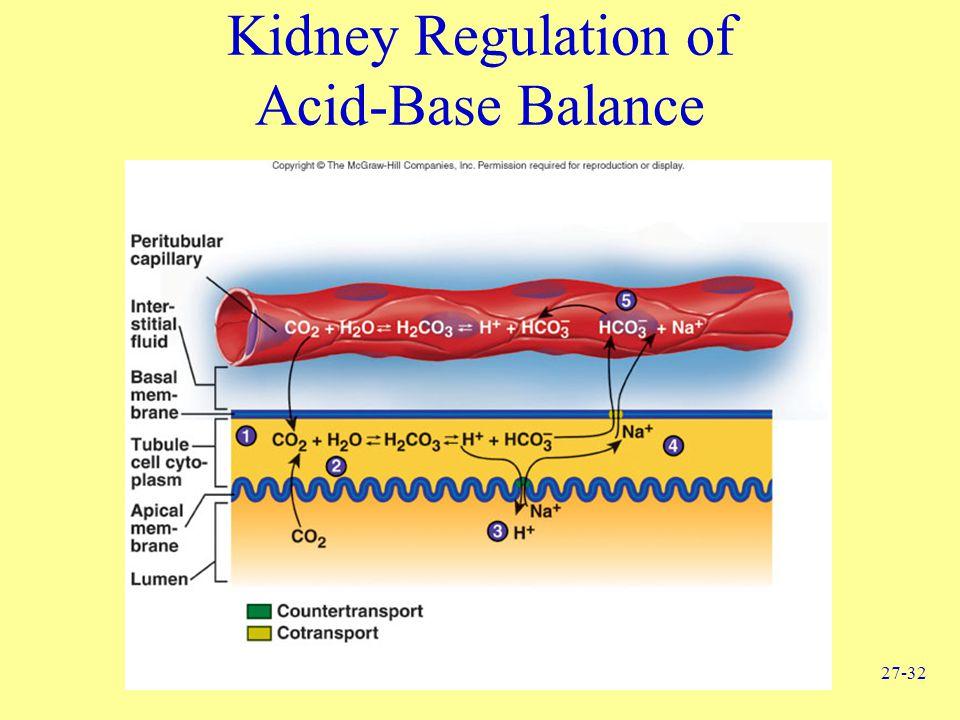 27-32 Kidney Regulation of Acid-Base Balance