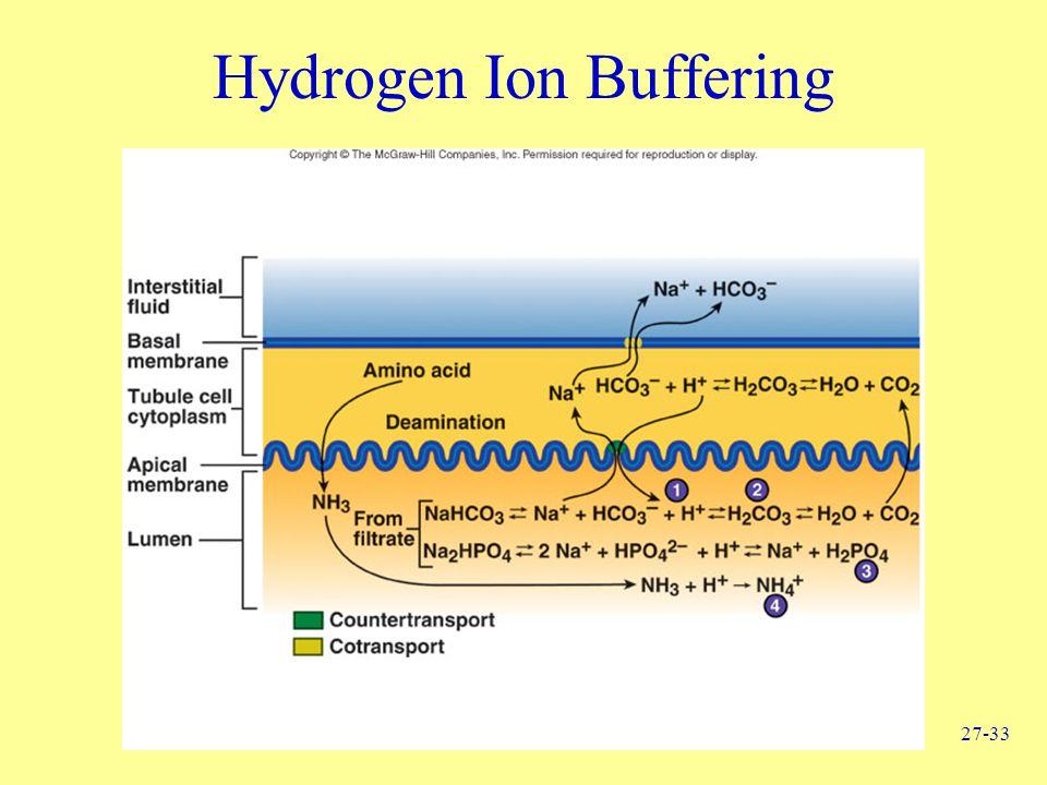 27-33 Hydrogen Ion Buffering