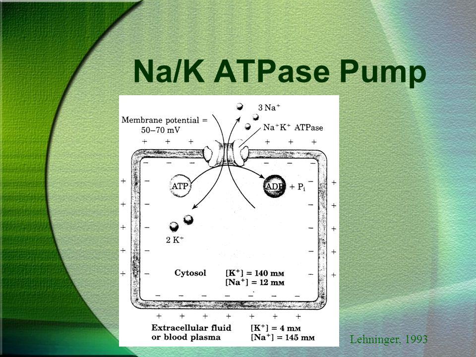Na/K ATPase Pump Lehninger, 1993