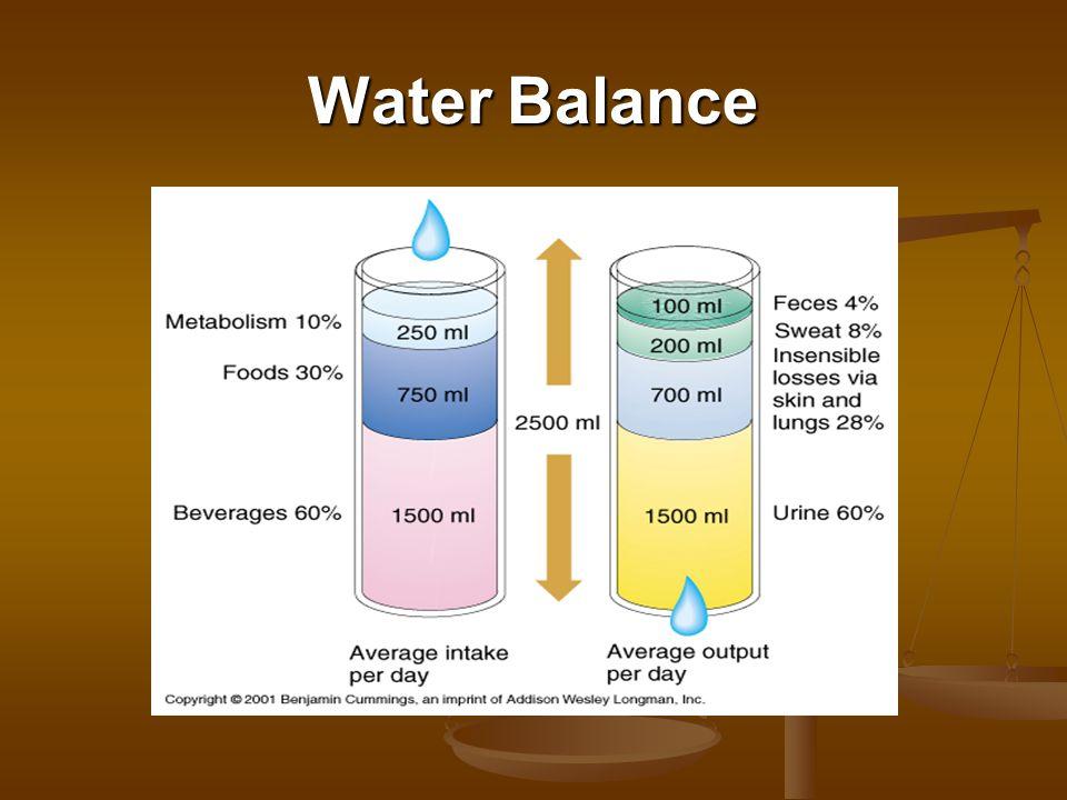 Regulation of Water Intake