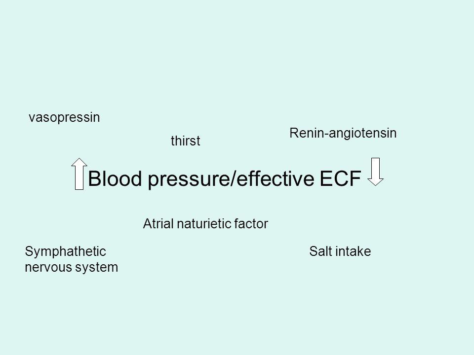Blood pressure/effective ECF vasopressin Symphathetic nervous system Atrial naturietic factor Renin-angiotensin thirst Salt intake
