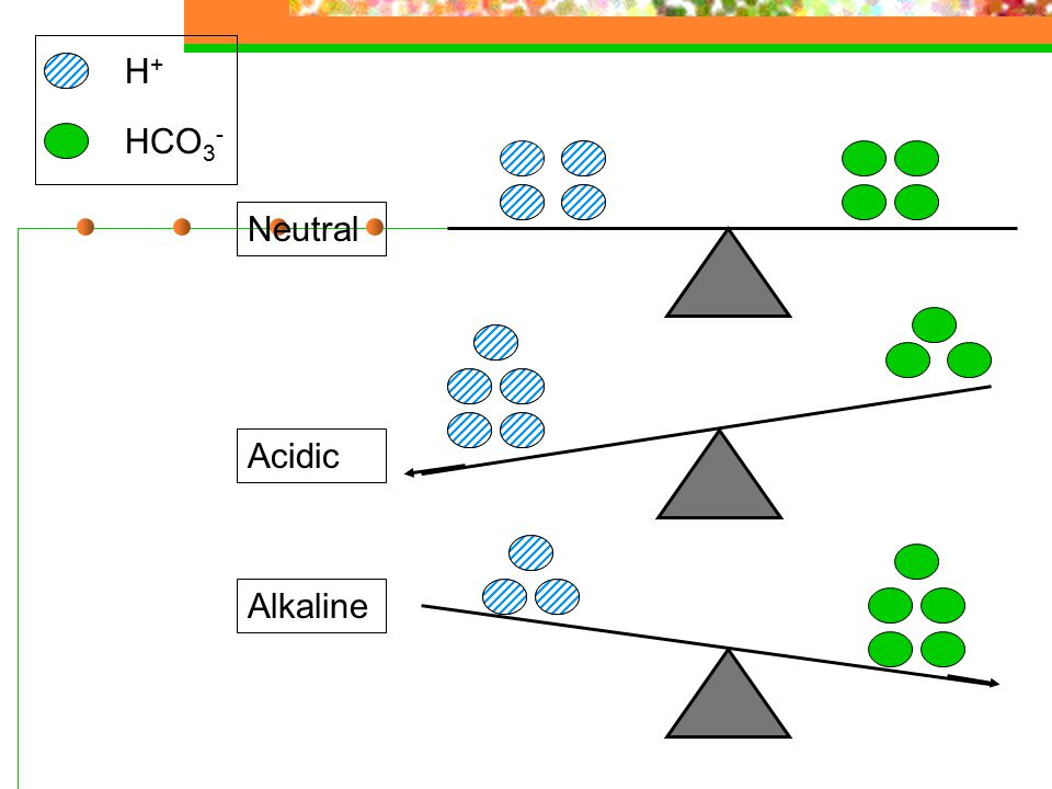 Neutral H+H+ HCO 3 - Alkaline Acidic