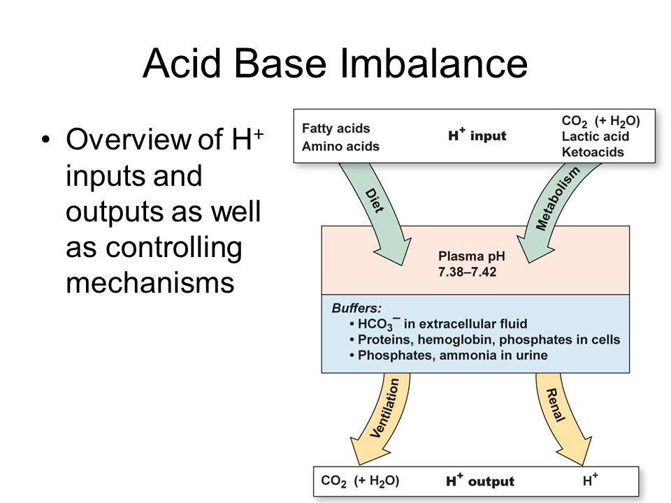 Acid Base Imbalance Overview of H + inputs and outputs as well as controlling mechanisms