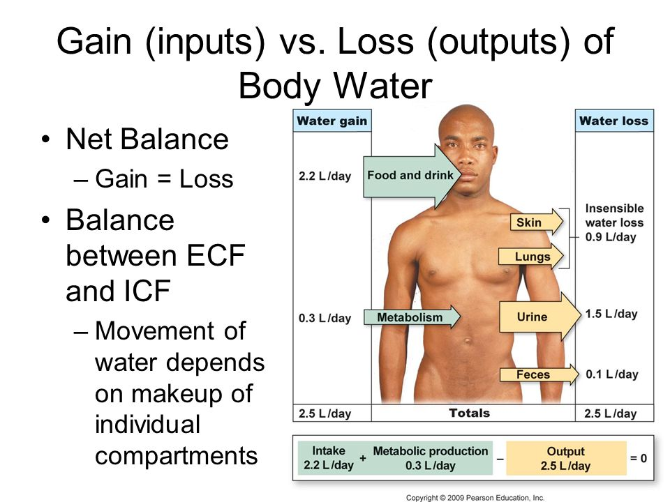 Gain (inputs) vs. Loss (outputs) of Body Water Net Balance –Gain = Loss Balance between ECF and ICF –Movement of water depends on makeup of individual