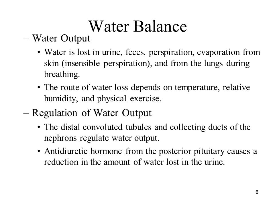 8 Water Balance –Water Output Water is lost in urine, feces, perspiration, evaporation from skin (insensible perspiration), and from the lungs during breathing.