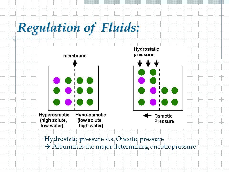 Regulation of Fluids: Hydrostatic pressure v.s.