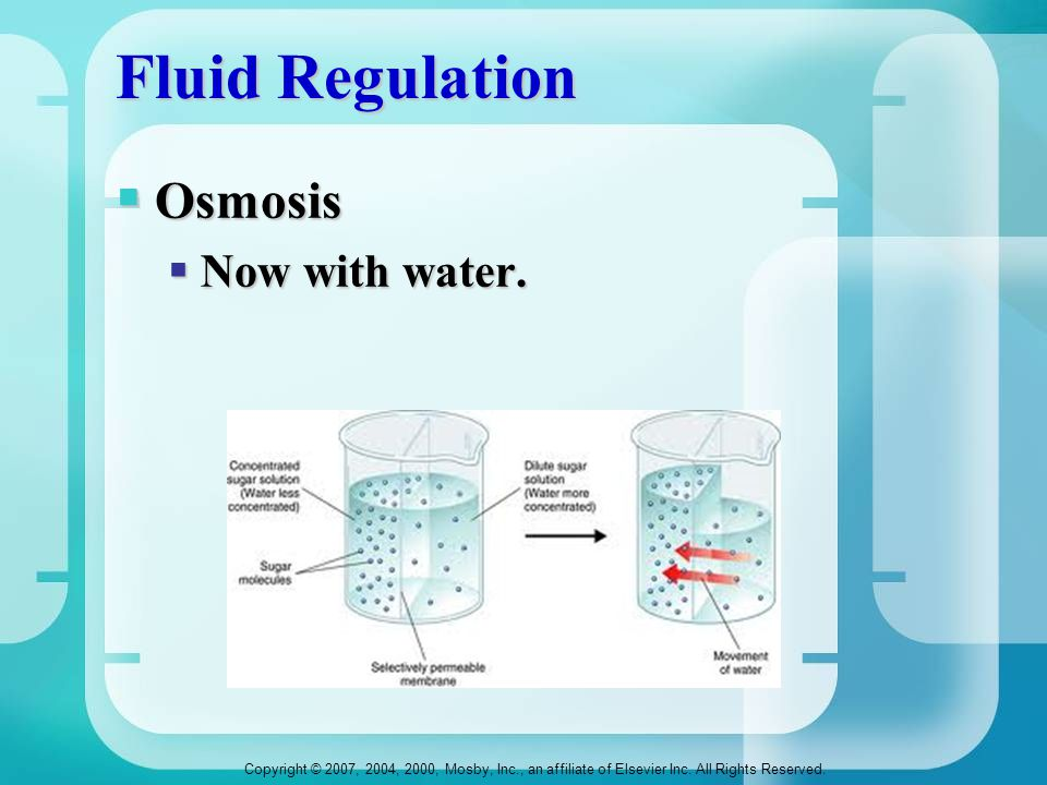 Copyright © 2007, 2004, 2000, Mosby, Inc., an affiliate of Elsevier Inc. All Rights Reserved. Fluid Regulation  Osmosis  Now with water.