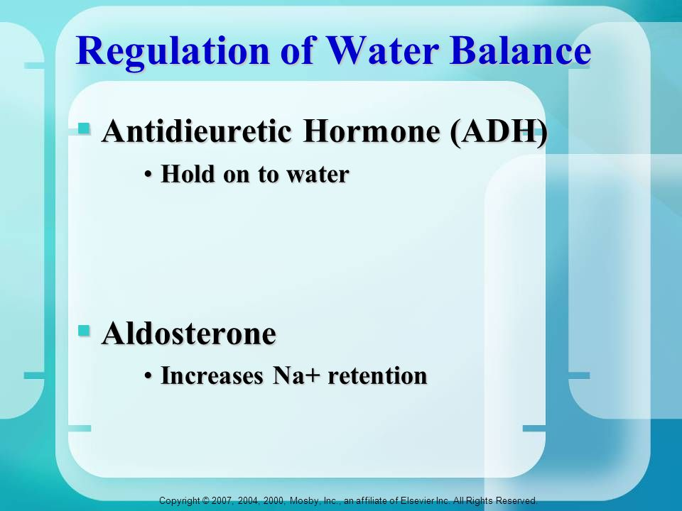 Copyright © 2007, 2004, 2000, Mosby, Inc., an affiliate of Elsevier Inc. All Rights Reserved. Regulation of Water Balance  Antidieuretic Hormone (ADH
