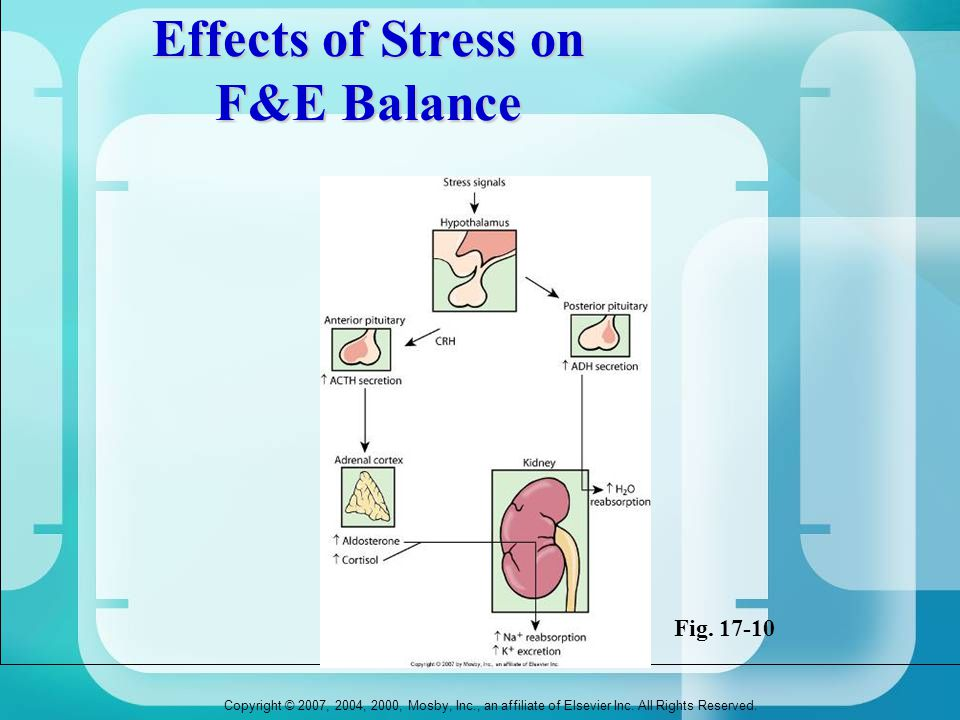 Copyright © 2007, 2004, 2000, Mosby, Inc., an affiliate of Elsevier Inc. All Rights Reserved. Effects of Stress on F&E Balance Fig. 17-10