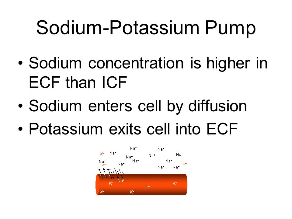 Sodium-Potassium Pump Sodium concentration is higher in ECF than ICF Sodium enters cell by diffusion Potassium exits cell into ECF