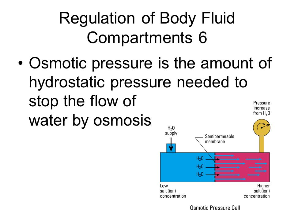 Regulation of Body Fluid Compartments 6 Osmotic pressure is the amount of hydrostatic pressure needed to stop the flow of water by osmosis