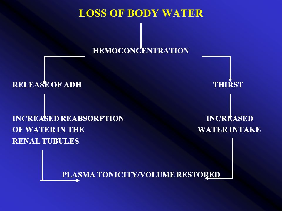 LOSS OF BODY WATER HEMOCONCENTRATION RELEASE OF ADH THIRST INCREASED REABSORPTION INCREASED OF WATER IN THE WATER INTAKE RENAL TUBULES PLASMA TONICITY/VOLUME RESTORED