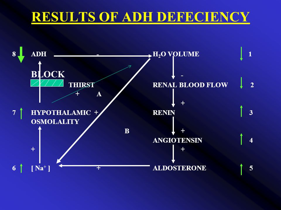 RESULTS OF ADH DEFECIENCY 8ADH-H 2 O VOLUME 1 BLOCK - THIRSTRENAL BLOOD FLOW 2 +A + 7HYPOTHALAMIC +RENIN 3 OSMOLALITY B+ ANGIOTENSIN 4+ 6[ Na + ]+ALDOSTERONE 5