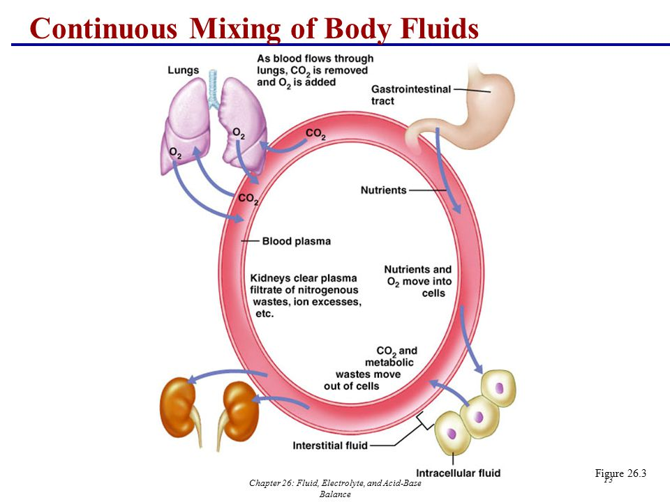Chapter 26: Fluid, Electrolyte, and Acid-Base Balance 13 Continuous Mixing of Body Fluids Figure 26.3