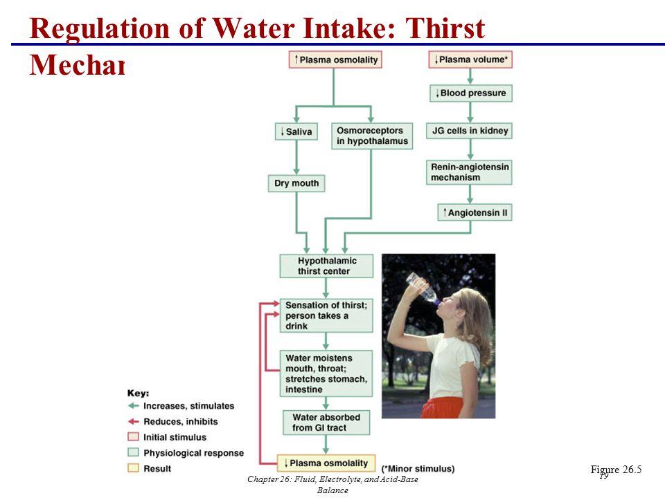 Chapter 26: Fluid, Electrolyte, and Acid-Base Balance 19 Regulation of Water Intake: Thirst Mechanism Figure 26.5