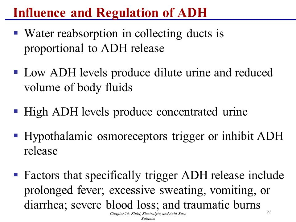 Chapter 26: Fluid, Electrolyte, and Acid-Base Balance 21 Influence and Regulation of ADH  Water reabsorption in collecting ducts is proportional to A