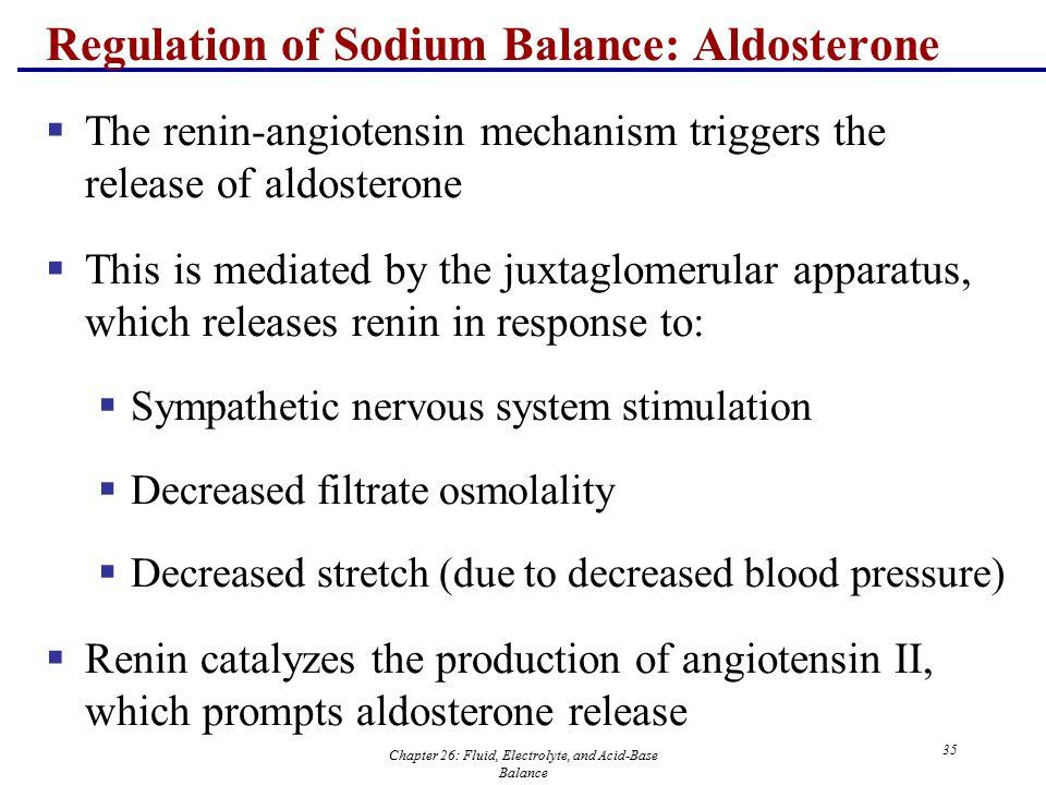 Chapter 26: Fluid, Electrolyte, and Acid-Base Balance 35 Regulation of Sodium Balance: Aldosterone  The renin-angiotensin mechanism triggers the rele