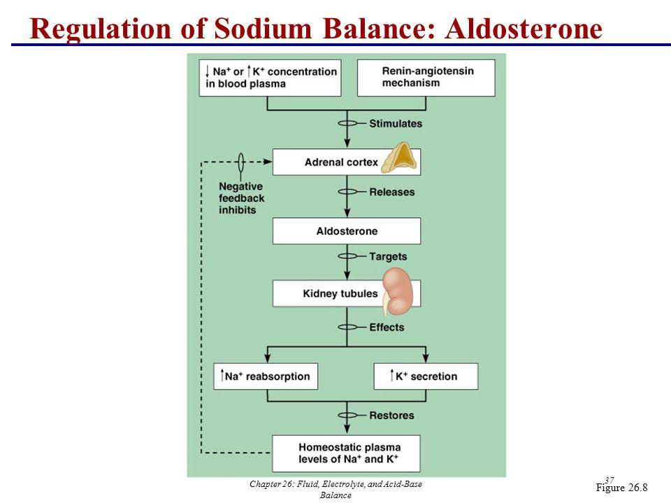 Chapter 26: Fluid, Electrolyte, and Acid-Base Balance 37 Regulation of Sodium Balance: Aldosterone Figure 26.8