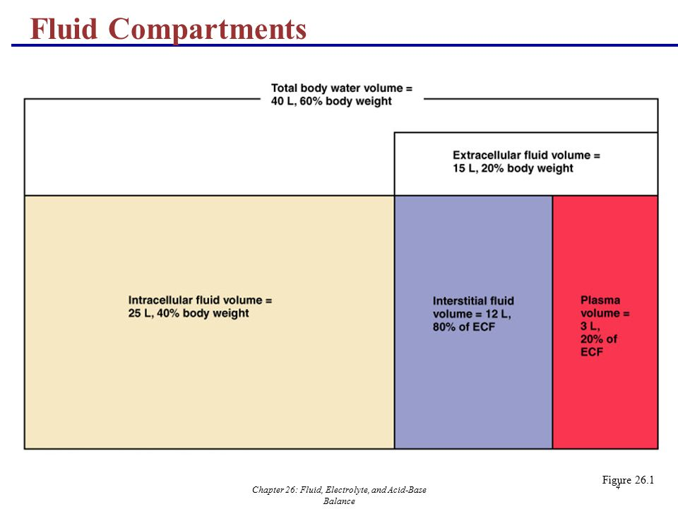 Chapter 26: Fluid, Electrolyte, and Acid-Base Balance 4 Fluid Compartments Figure 26.1
