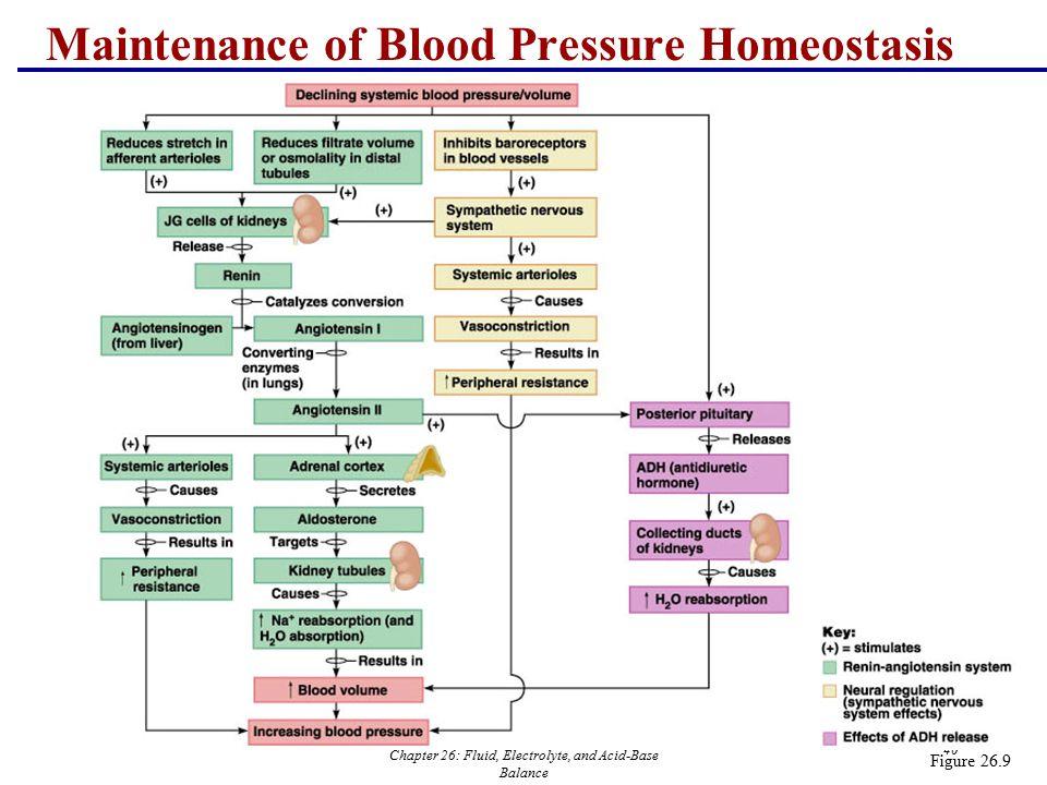Chapter 26: Fluid, Electrolyte, and Acid-Base Balance 40 Figure 26.9 Maintenance of Blood Pressure Homeostasis