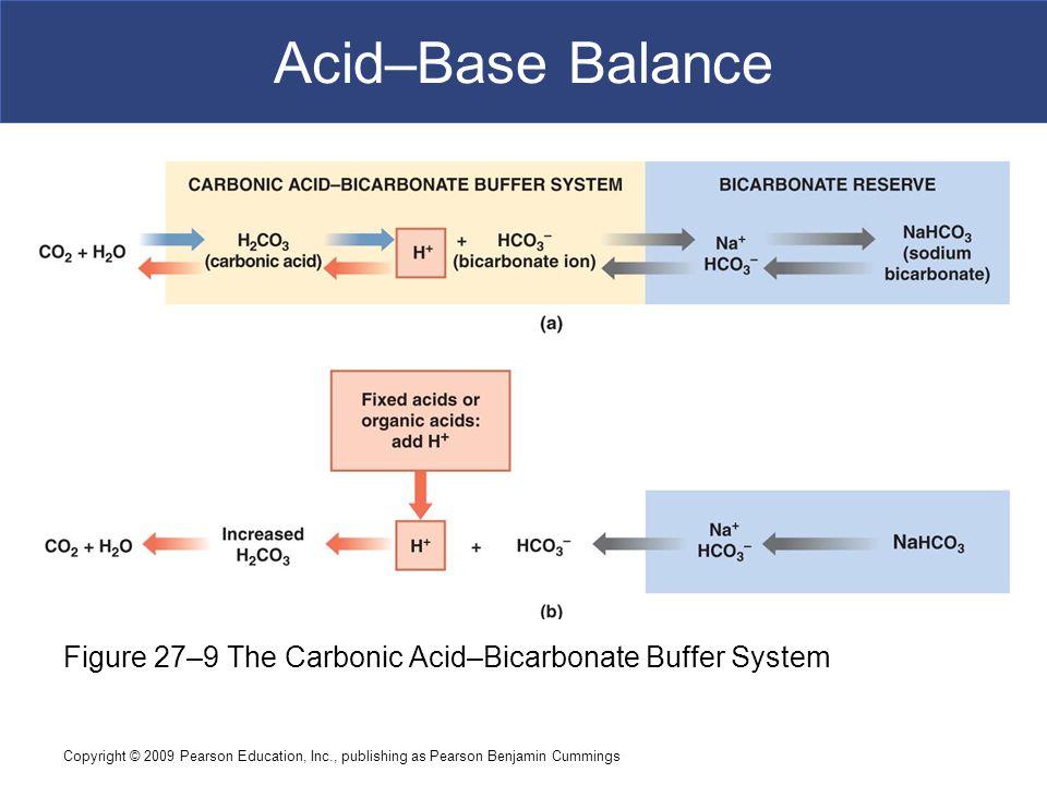 Copyright © 2009 Pearson Education, Inc., publishing as Pearson Benjamin Cummings Acid–Base Balance Figure 27–9 The Carbonic Acid–Bicarbonate Buffer S