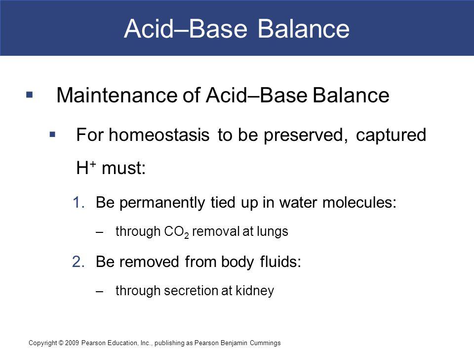 Copyright © 2009 Pearson Education, Inc., publishing as Pearson Benjamin Cummings Acid–Base Balance  Maintenance of Acid–Base Balance  For homeostas