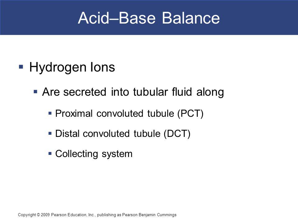 Copyright © 2009 Pearson Education, Inc., publishing as Pearson Benjamin Cummings Acid–Base Balance  Hydrogen Ions  Are secreted into tubular fluid