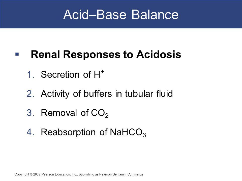 Copyright © 2009 Pearson Education, Inc., publishing as Pearson Benjamin Cummings Acid–Base Balance  Renal Responses to Acidosis 1.Secretion of H + 2