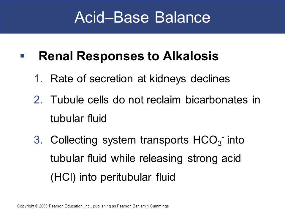 Copyright © 2009 Pearson Education, Inc., publishing as Pearson Benjamin Cummings Acid–Base Balance  Renal Responses to Alkalosis 1.Rate of secretion