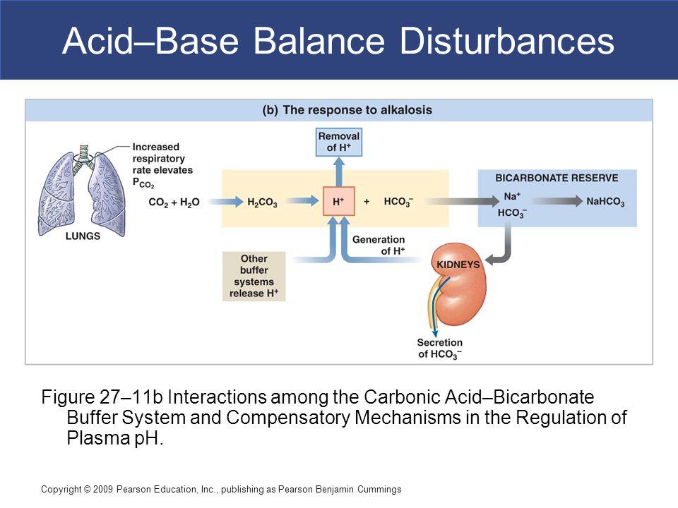 Copyright © 2009 Pearson Education, Inc., publishing as Pearson Benjamin Cummings Acid–Base Balance Disturbances Figure 27–11b Interactions among the