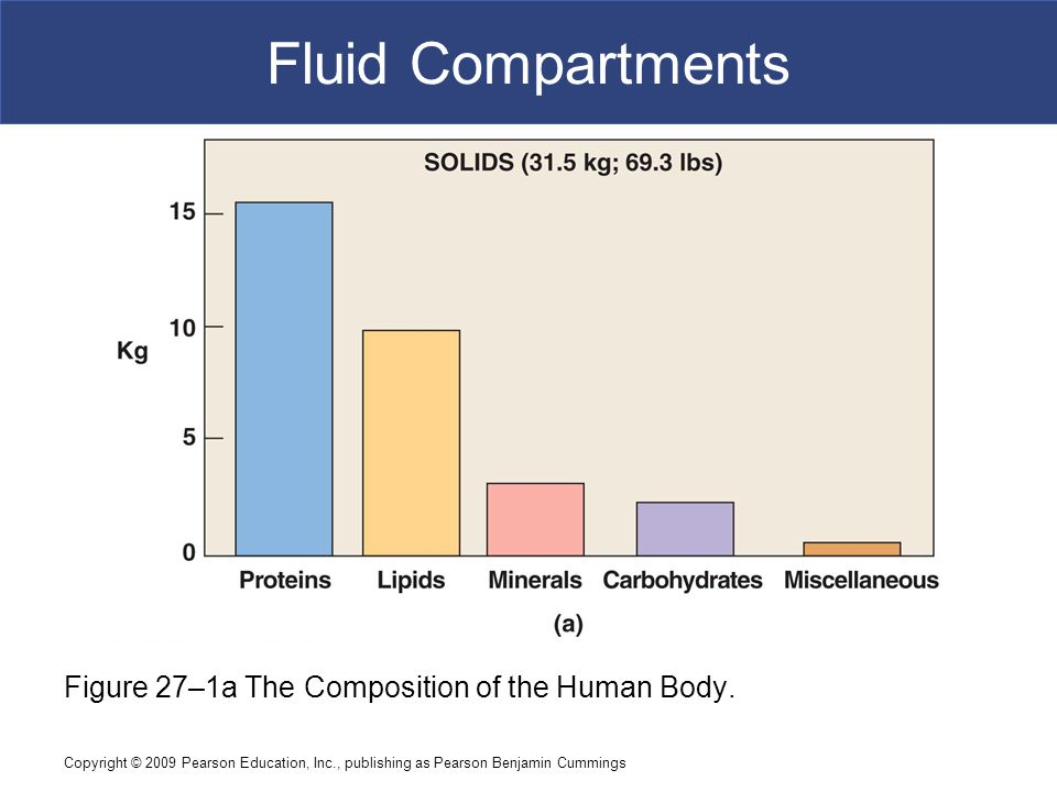 Copyright © 2009 Pearson Education, Inc., publishing as Pearson Benjamin Cummings Fluid Compartments Figure 27–1a The Composition of the Human Body.