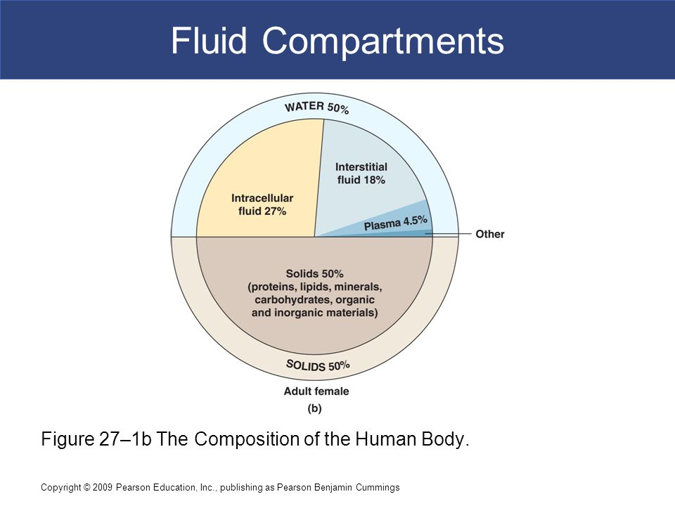 Copyright © 2009 Pearson Education, Inc., publishing as Pearson Benjamin Cummings Fluid Compartments Figure 27–1b The Composition of the Human Body.