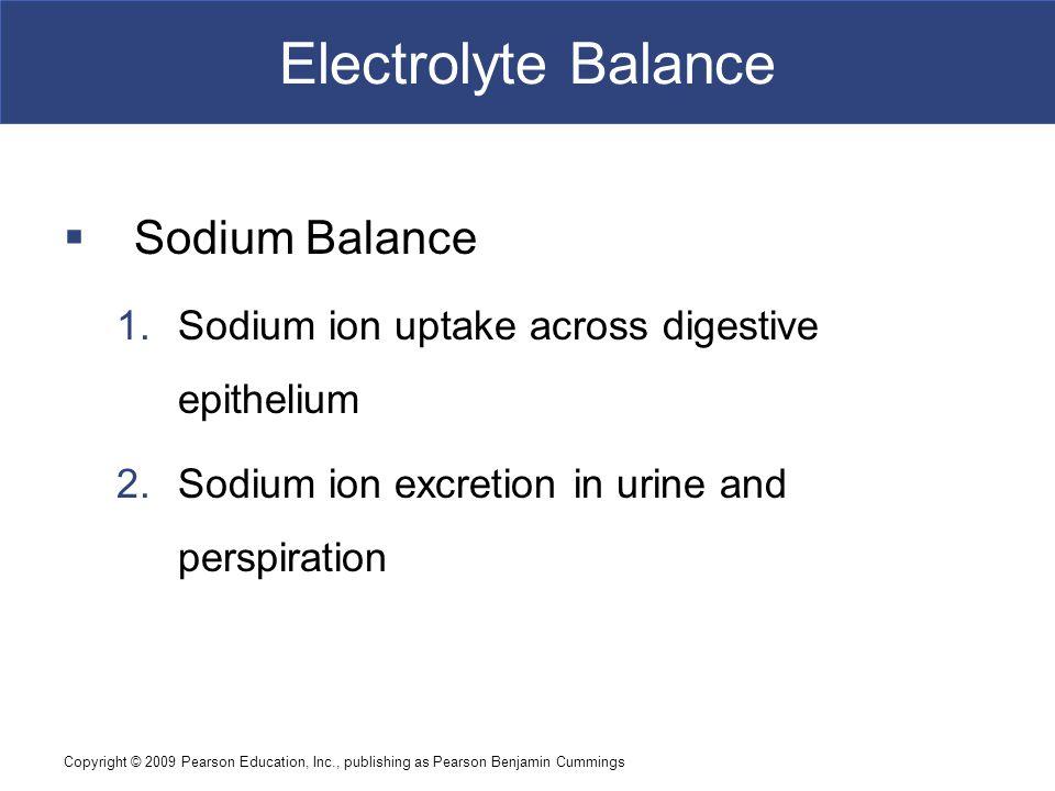 Copyright © 2009 Pearson Education, Inc., publishing as Pearson Benjamin Cummings Electrolyte Balance  Sodium Balance 1.Sodium ion uptake across dige