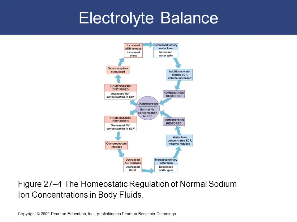 Copyright © 2009 Pearson Education, Inc., publishing as Pearson Benjamin Cummings Electrolyte Balance Figure 27–4 The Homeostatic Regulation of Normal