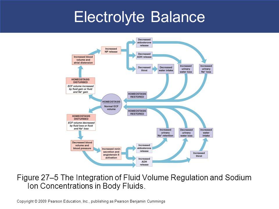 Copyright © 2009 Pearson Education, Inc., publishing as Pearson Benjamin Cummings Electrolyte Balance Figure 27–5 The Integration of Fluid Volume Regu