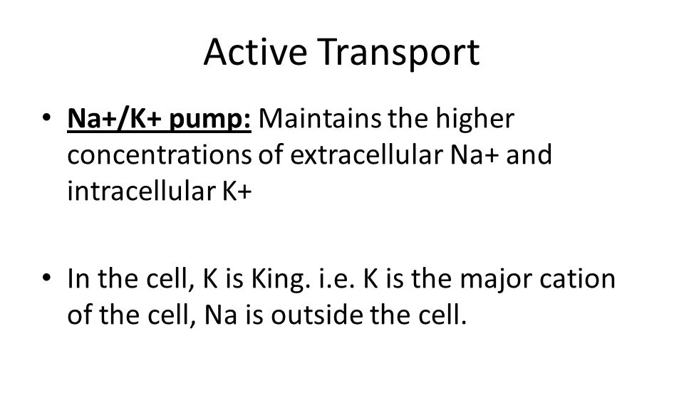 Active Transport Na+/K+ pump: Maintains the higher concentrations of extracellular Na+ and intracellular K+ In the cell, K is King.