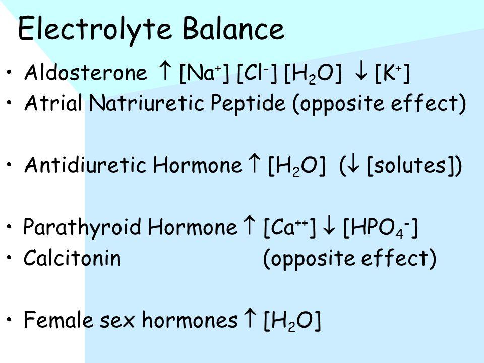 Electrolyte Balance Aldosterone  [Na + ] [Cl - ] [H 2 O]  [K + ] Atrial Natriuretic Peptide (opposite effect) Antidiuretic Hormone  [H 2 O] (  [solutes]) Parathyroid Hormone  [Ca ++ ]  [HPO 4 - ] Calcitonin (opposite effect) Female sex hormones  [H 2 O]
