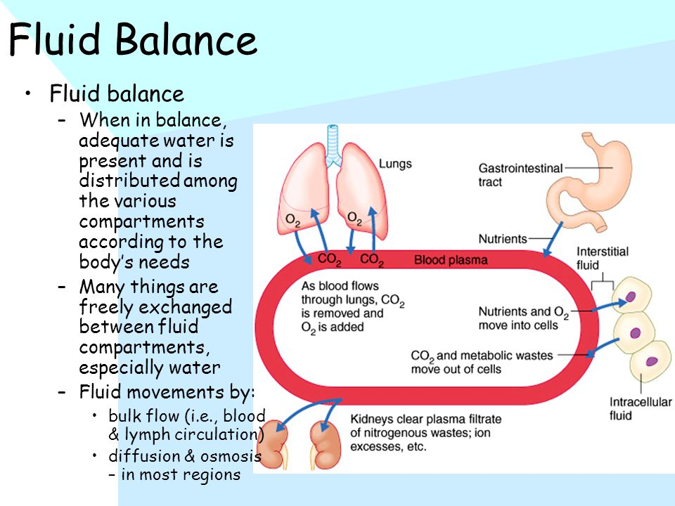 Fluid Balance Fluid balance –When in balance, adequate water is present and is distributed among the various compartments according to the body's needs –Many things are freely exchanged between fluid compartments, especially water –Fluid movements by: bulk flow (i.e., blood & lymph circulation) diffusion & osmosis – in most regions