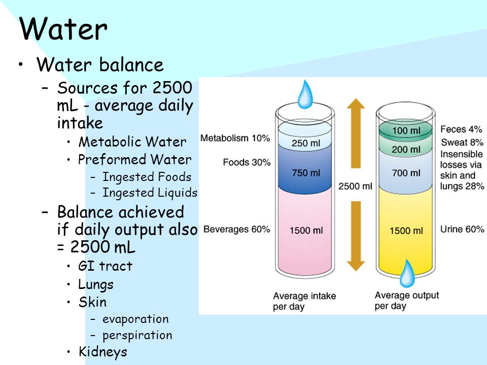 Water Water balance –Sources for 2500 mL - average daily intake Metabolic Water Preformed Water –Ingested Foods –Ingested Liquids –Balance achieved if daily output also = 2500 mL GI tract Lungs Skin –evaporation –perspiration Kidneys
