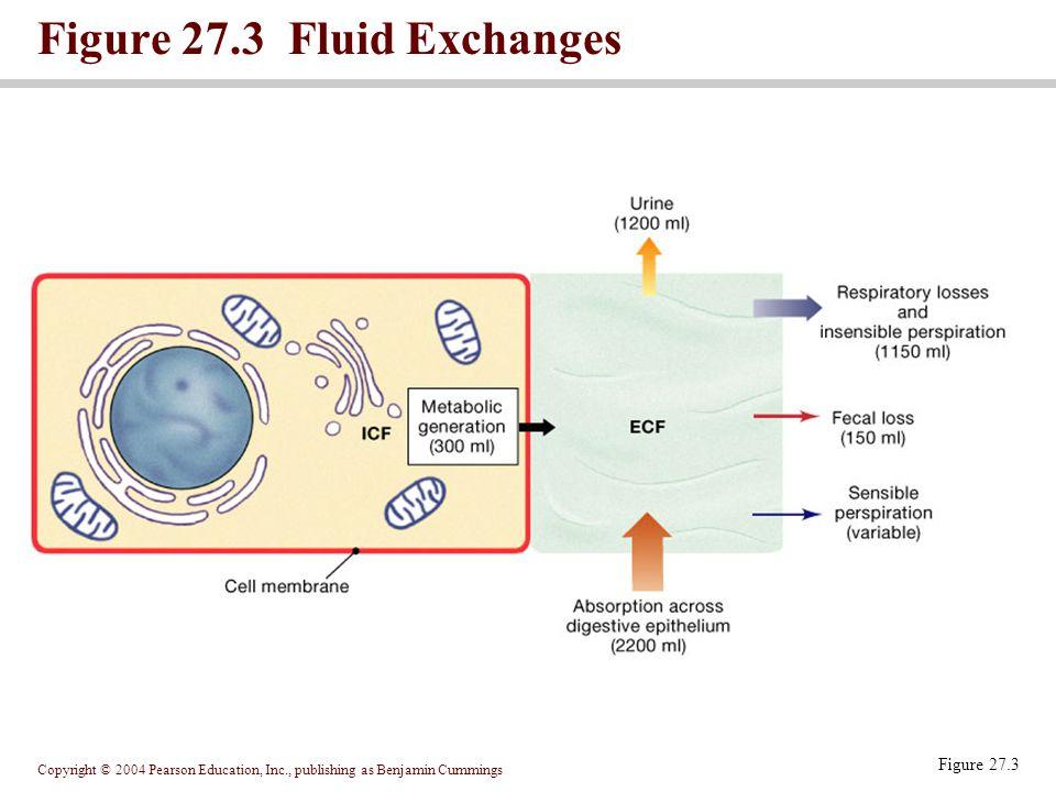 Copyright © 2004 Pearson Education, Inc., publishing as Benjamin Cummings Figure 27.3 Fluid Exchanges Figure 27.3